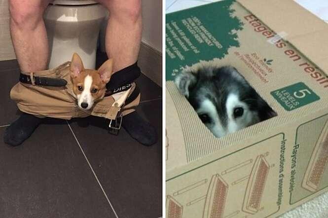 Imagens mostrando gatos que pensam que são cães e cães que pensam que são gatos