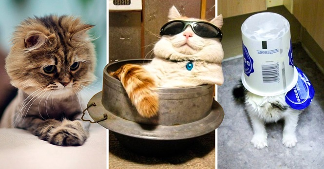 As melhores fotos de todos os tempos envolvendo gatos