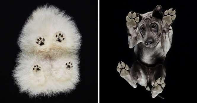 Ensaio fotográfico mostra cães por outro ângulo