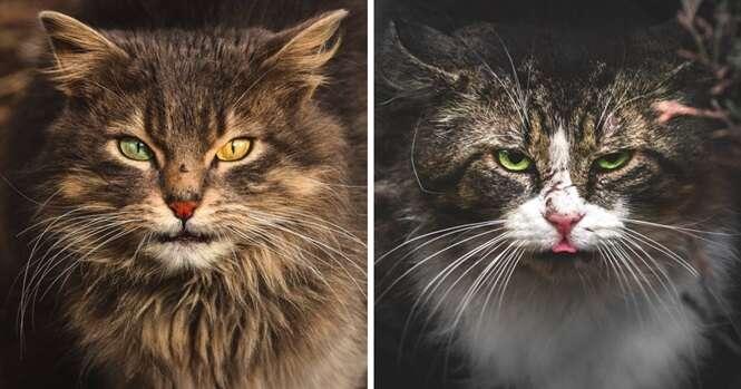 Fotógrafo da Lituânia registra imagens fascinantes de gatos de rua