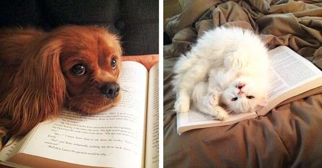 Pets carentes que não se importam se você está ocupado