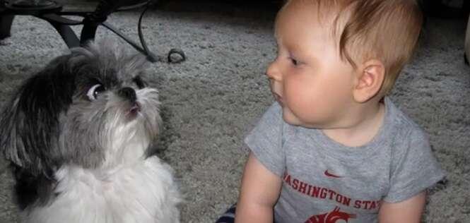 Vídeo: a reação de gatos e cães ao encontrarem bebês pela primeira vez