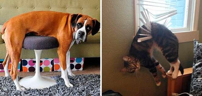 Cães e gatos que têm dificuldades para usar alguns objetos de casa