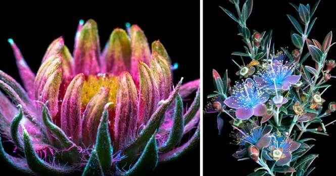As plantas de um jeito que você nunca viu