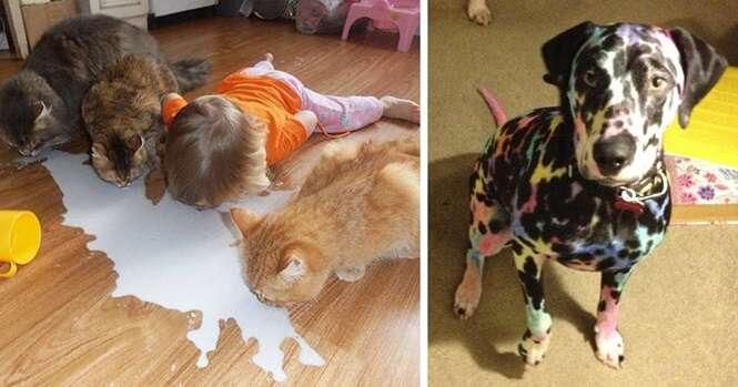 Provas de que você nunca deve deixar animais de estimação com crianças