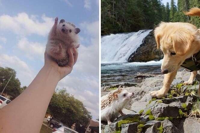 Imagens provando que os ouriços são animais absurdamente fofos