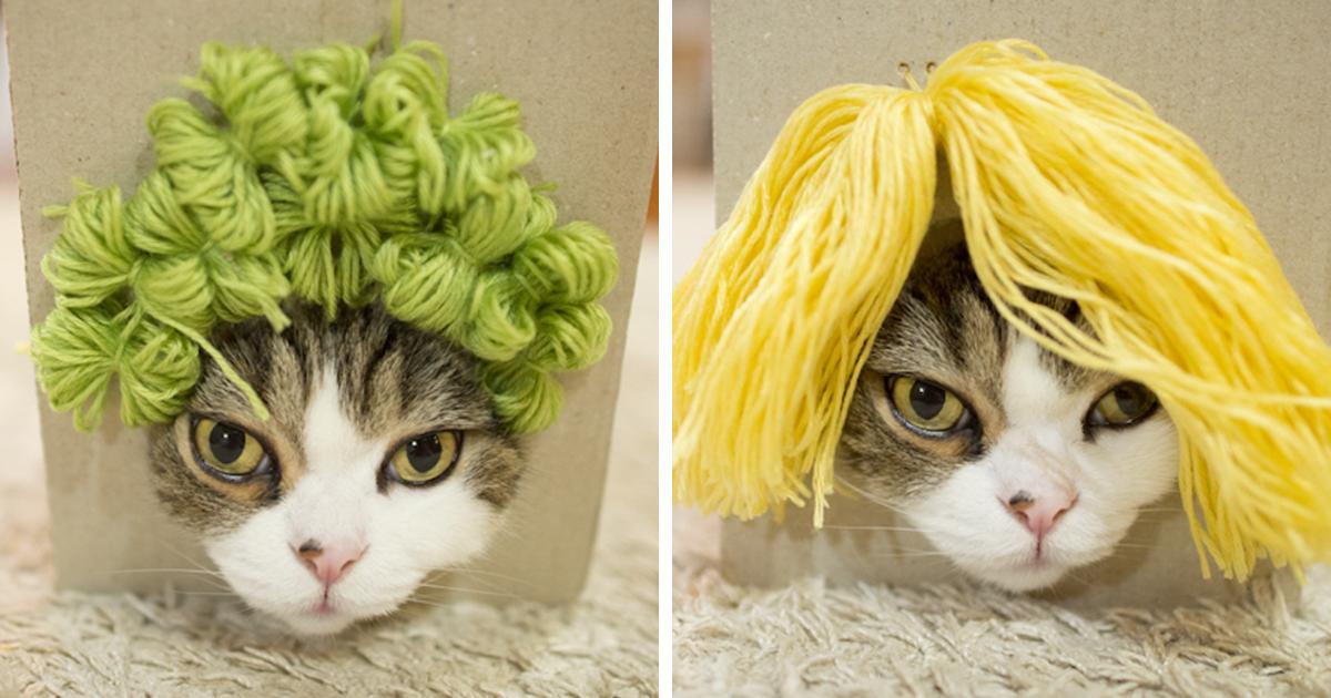 """Vídeo: este gatinho acabou usando várias perucas após cair na """"armadilha"""" de seu dono e o resultado é hilário"""
