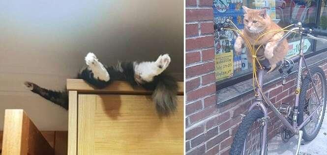 Lugares onde seria improvável você procurar seu gato