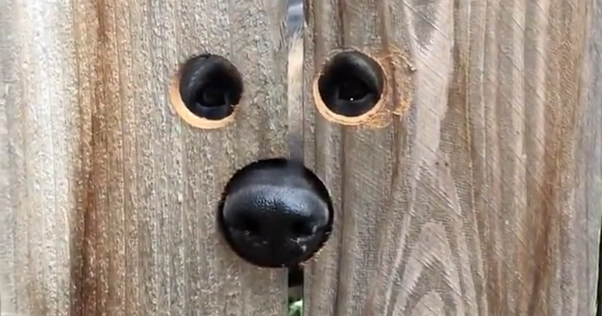 Mulher faz a coisa mais inteligente para ajudar cão que ficava pulando para espiá-la do outro lado da cerca