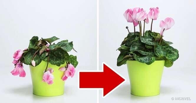 Estes três ingredientes vão dar vida à suas plantas novamente
