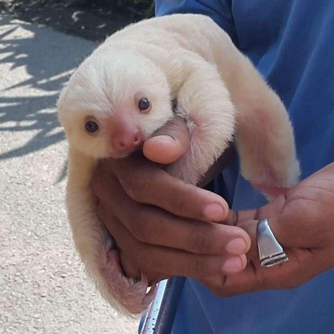 Os filhotes mais fofos do planeta