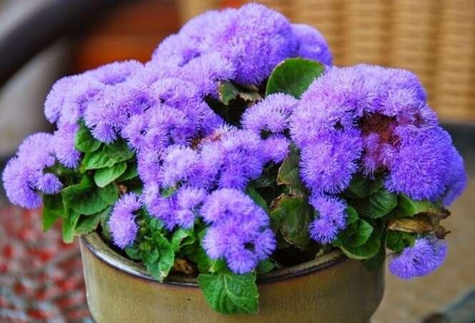 Plantas que repelem insetos e que são fáceis de cultivar em casaPlantas que repelem insetos e que são fáceis de cultivar em casa
