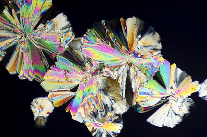 Fotos fascinantes de alimentos sob o microscópio