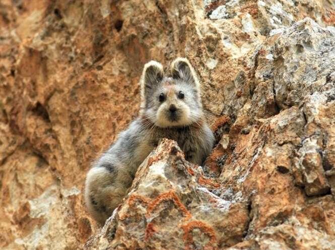 Animais raros dos quais você provavelmente nunca ouviu falar