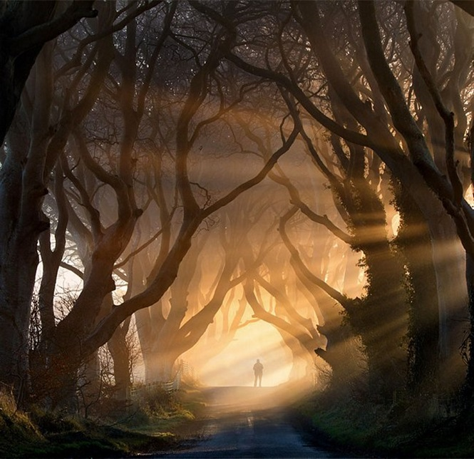 Túneis incríveis formados por árvores