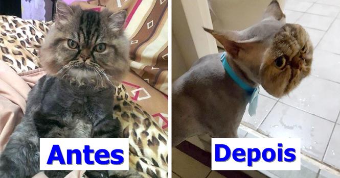 Proprietária é surpreendida após levar gato para ser tosado