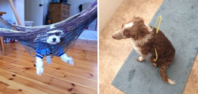 Cães que se arrependeram rapidamente das escolhas que fizeram