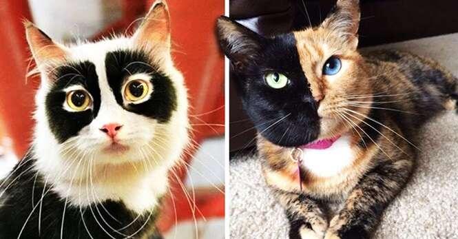 Gatos com marcas de nascença que os tornaram únicos