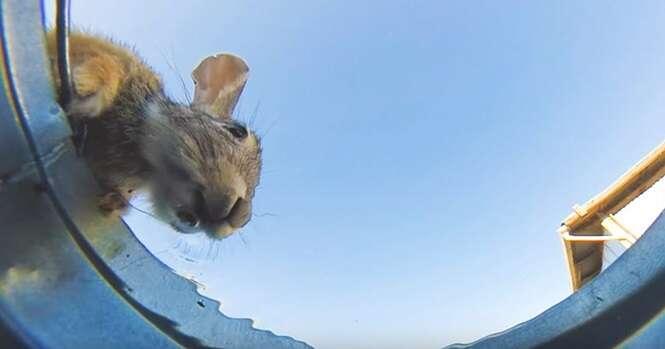 Vídeo: homem esconde câmera em balde d'água para registrar como animais matam a sede