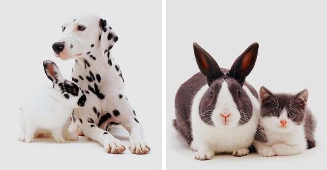 Fotos mostrando animais de espécies diferentes, mas de pelagens iguais
