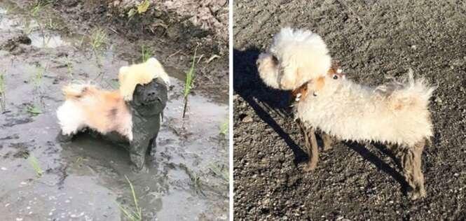 Cachorros que foram se divertir na lama e... minha Nossa Senhora!