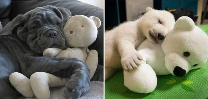 Animais que não abrem mão de seus bichinhos de pelúcia na hora do soninho