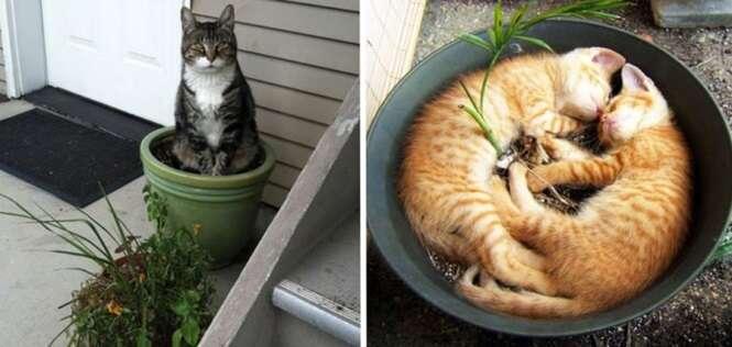 Gatos invejosos que querem trocar de lugar com as plantas