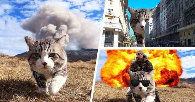 Este gatinho inspirou uma épica batalha de Photoshop na internet