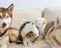 16 gatos que têm certeza de que se esconderam bem