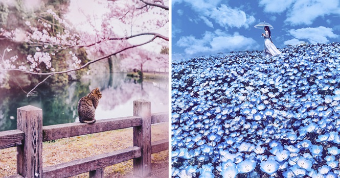 Fotos mostrando que o Japão durante a primavera parece um conto de fadas