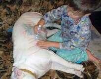 10 provas de que animais de estimação nunca devem ser deixados a sós com crianças