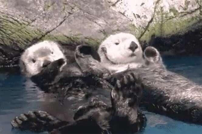 """As animações contidas neste post mostram lontras segurando as """"mãos"""" umas das outras"""