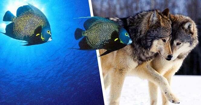 Espécies de animais que vivem com seus parceiros até que a morte os separe