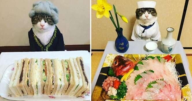 Os Cosplays deste gatinho estão ganhando os corações de muitos internautas