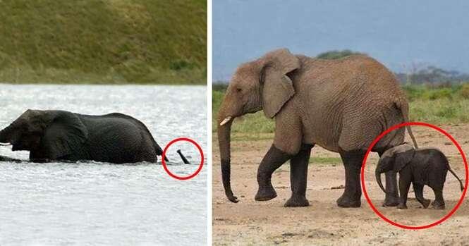 Bebês elefantes que colocarão ao menos um sorriso em seu rosto