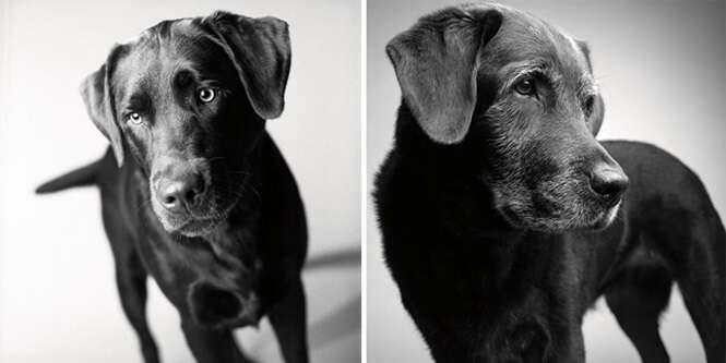 Projeto fotográfico emocionante mostra como os cães envelhecem