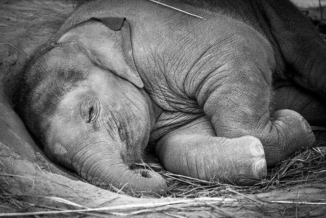 Bebês elefantes que vão alegrar o seu dia