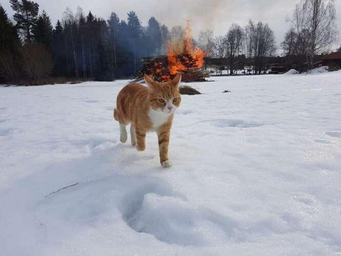 Gatos diabólicos que vão abalar o seu dia