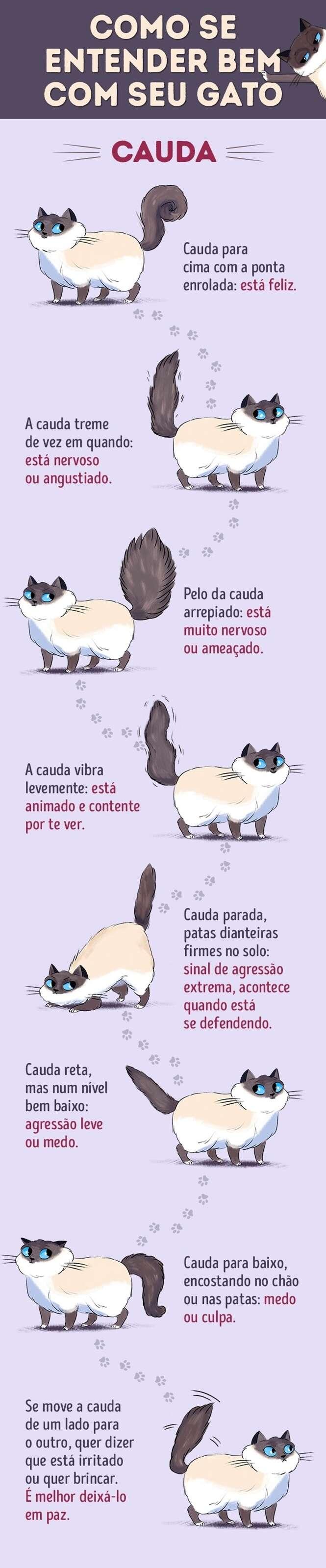 Aprenda a língua dos gatos com este guia