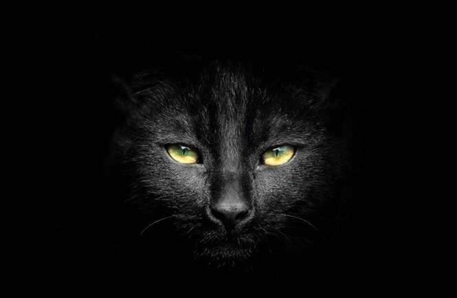Fotos de gatos mais escuros que a noite