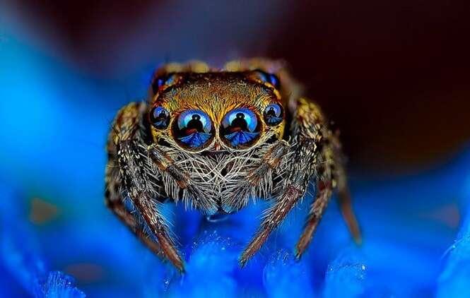Imagens que te farão ver aracnídeos e insetos de outra maneira