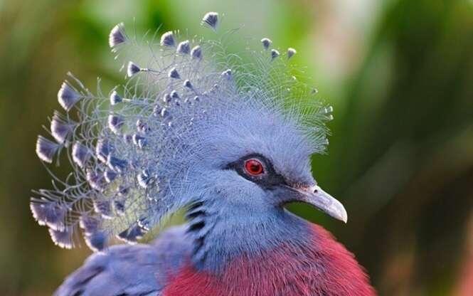 As aves mais exóticas do mundo