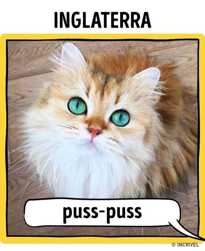 Saiba como os gatos são chamados em alguns países do mundo