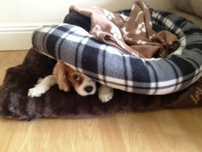 Cães tão bem escondidos que você jamais vai encontrá-los