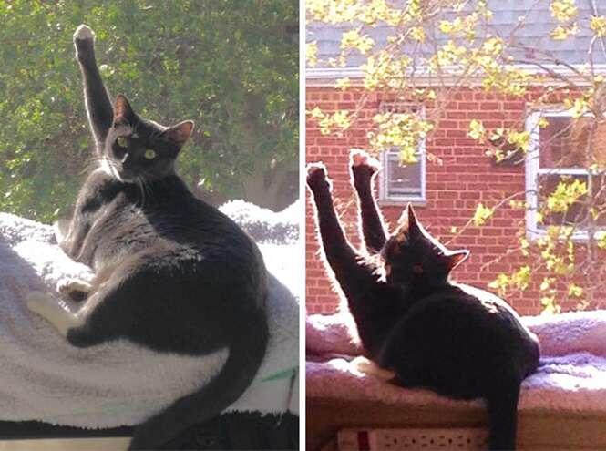 Gatos que amam o sol mais que qualquer outra coisa no mundo