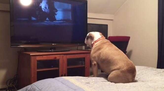 Vídeo: a reação deste buldogue assistindo a um filme de terror se tornou viral