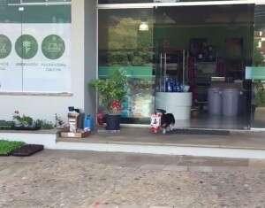 O vídeo deste cãozinho que compra a própria comida diariamente é adorável