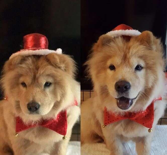 """Animais antes e depois de ouvirem a frase: """"bom garoto"""""""