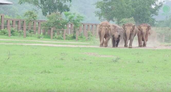 Vídeo mostrando grupo de elefantes correndo para ver filhote resgatado se torna viral