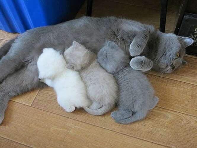 Mamães gato orgulhosas de seus filhotes